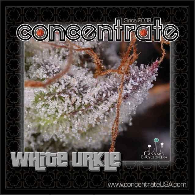 conc-whturkle-live-8-rgb.jpg
