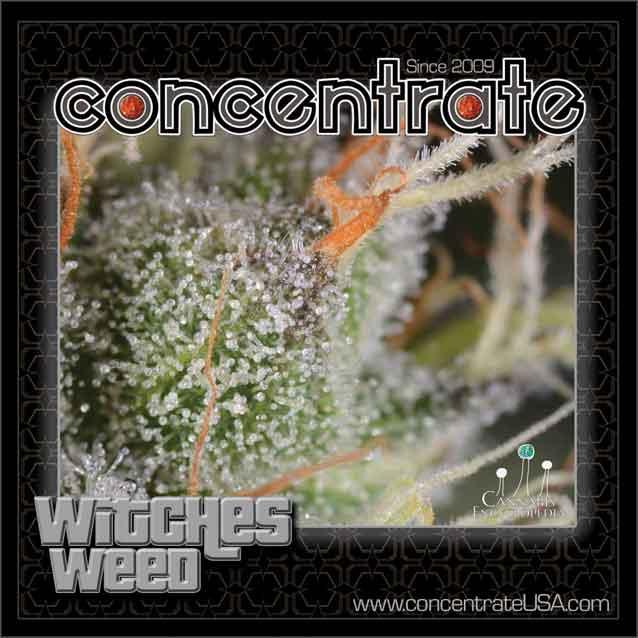 conc-wtchswd-live-4-rgb.jpg