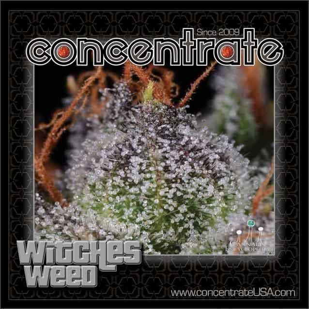 conc-wtchswd-live-5-rgb.jpg
