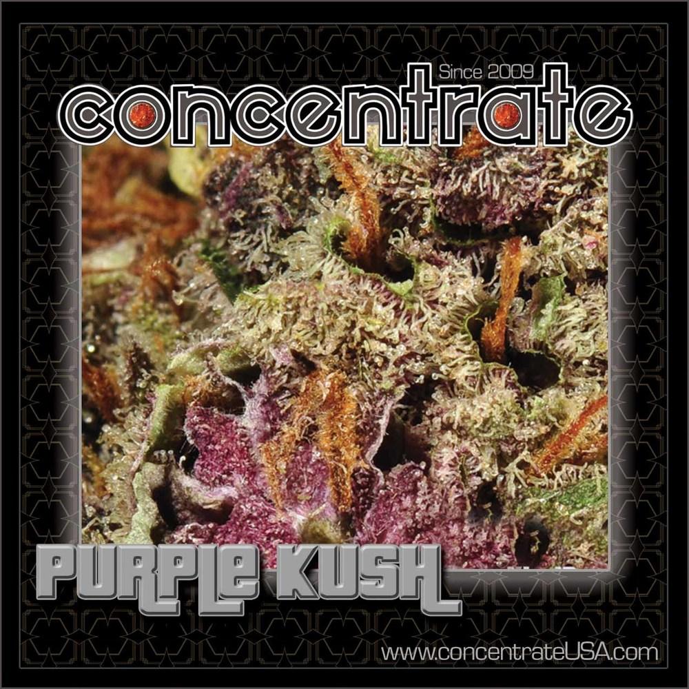 conc-prplksh2-rgb.jpg
