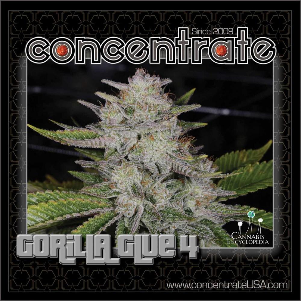 conc-gorlaglu-live-1-rgb.jpg