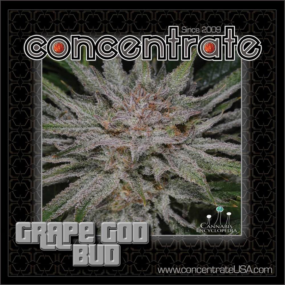 conc-grpgdbd-live-2-rgb.jpg