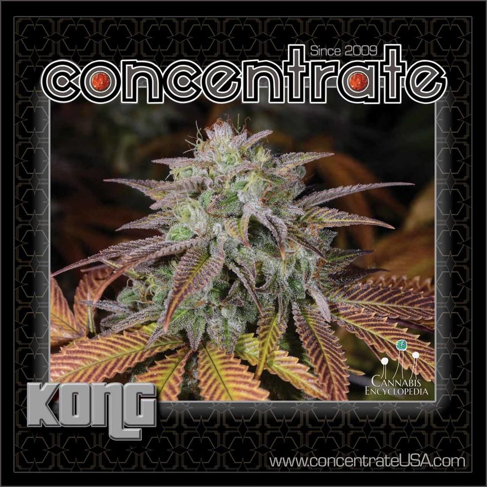 conc-kong-live-2-rgb.jpg