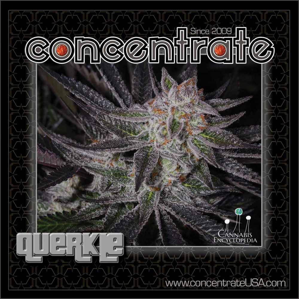 conc-querkle-live-2-rgb.jpg
