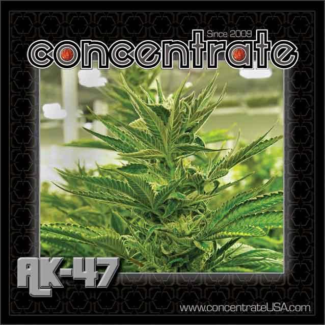 conc-ak47-live-2-rgb.jpg