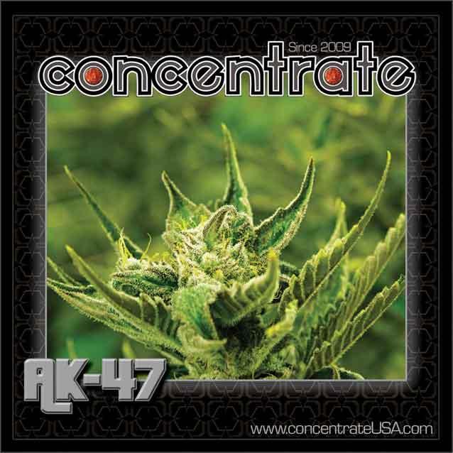 conc-ak47-live-3-rgb.jpg