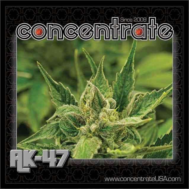 conc-ak47-live-4-rgb.jpg