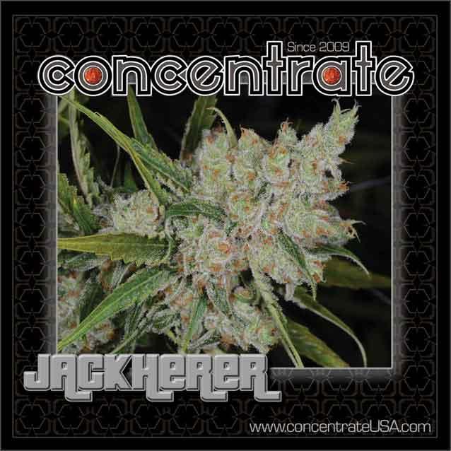 conc-jackh-live-5-rgb.jpg