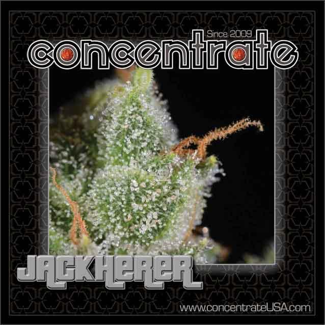 conc-jackh-live-7-rgb.jpg