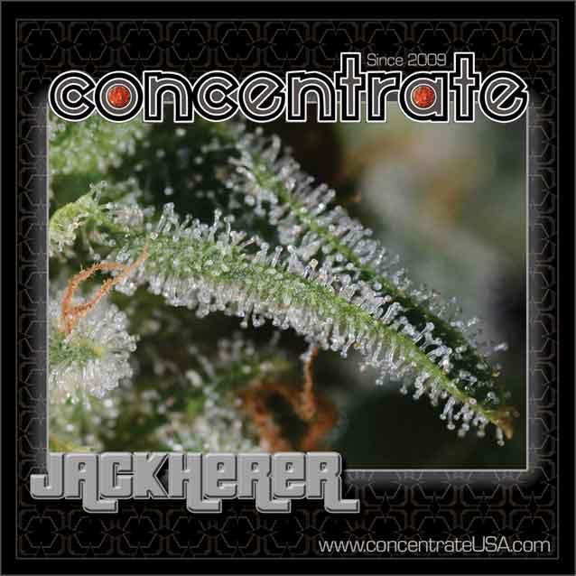 conc-jackh-live-9-rgb.jpg