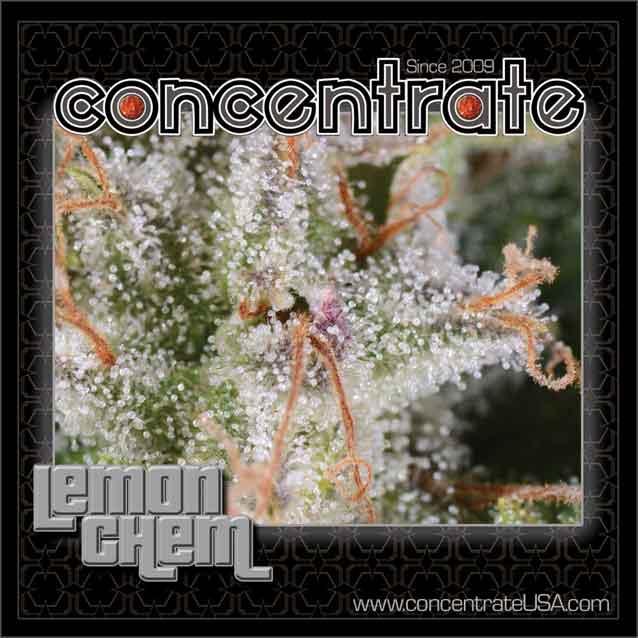 conc-lemchem-live-5-rgb.jpg