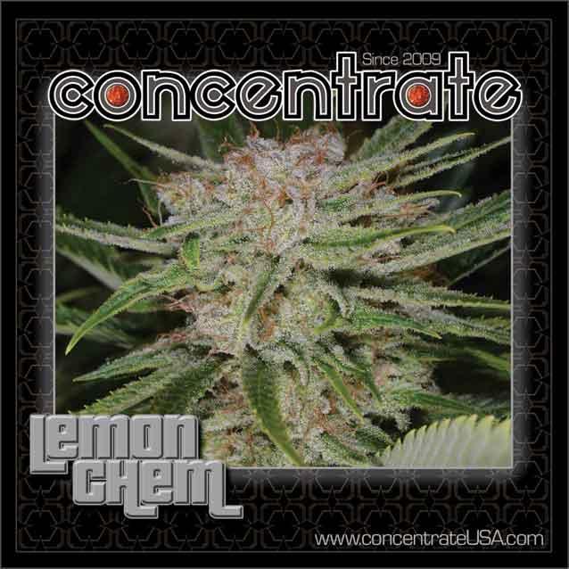 conc-lemchem-live-3-rgb.jpg