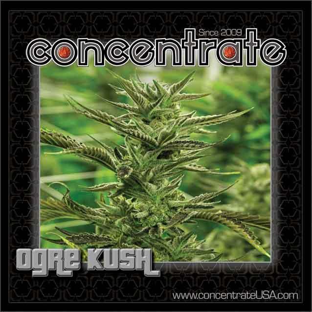 conc-ogrksh-live-1-rgb.jpg