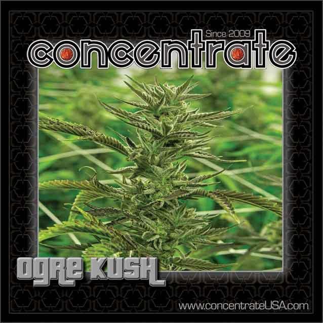 conc-ogrksh-live-2-rgb.jpg