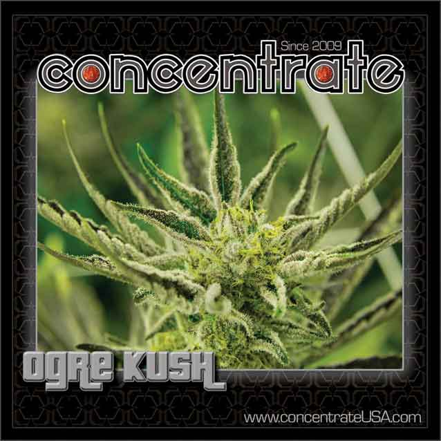 conc-ogrksh-live-3-rgb.jpg