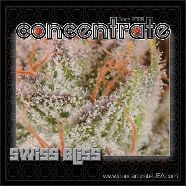 conc-swsbls-live-6-rgb.jpg