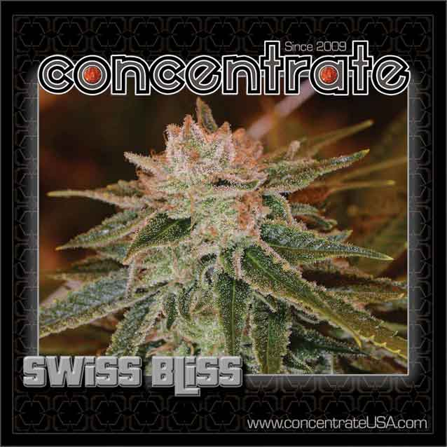 conc-swsbls-live-3-rgb.jpg