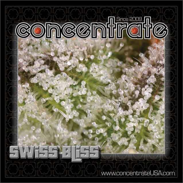 conc-swsbls-live-10-rgb.jpg