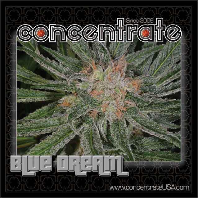 conc-bludrm-live-3-rgb.jpg