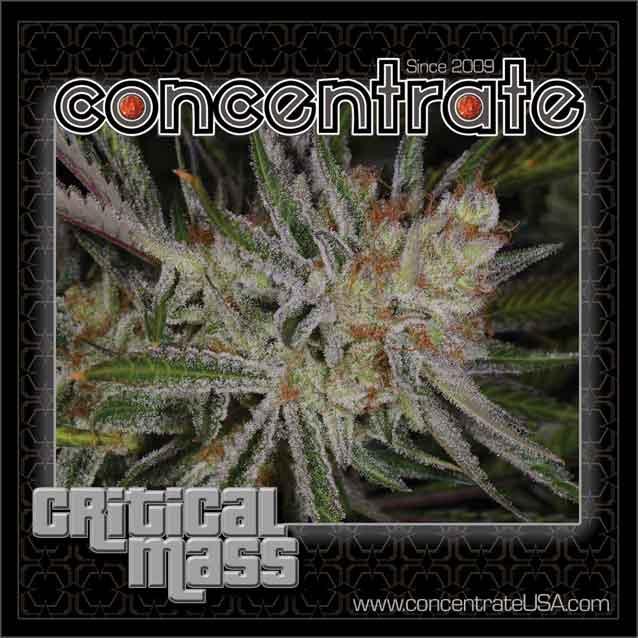 conc-crtclmass-live-2-4-rgb.jpg