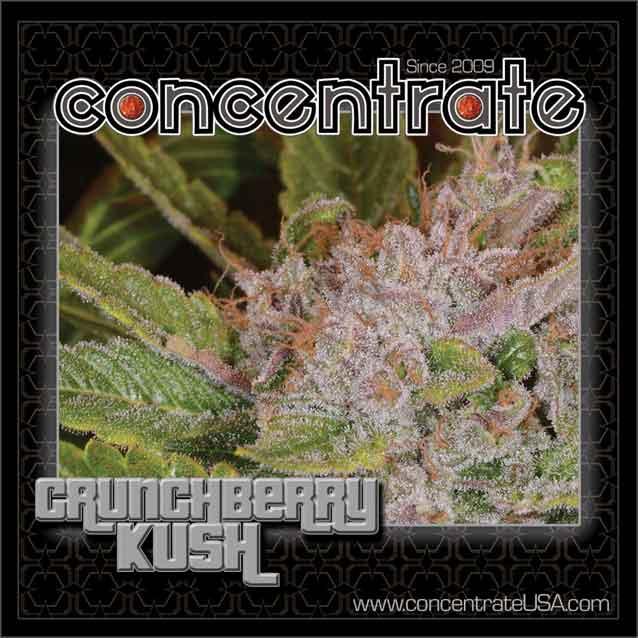 conc-crnchbrry-live-6-rgb.jpg