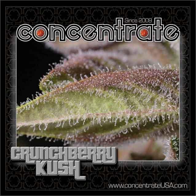 conc-crnchbrry-live-8-rgb.jpg