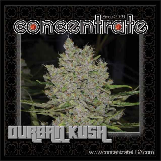 conc-drbnksh-live-3-rgb.jpg