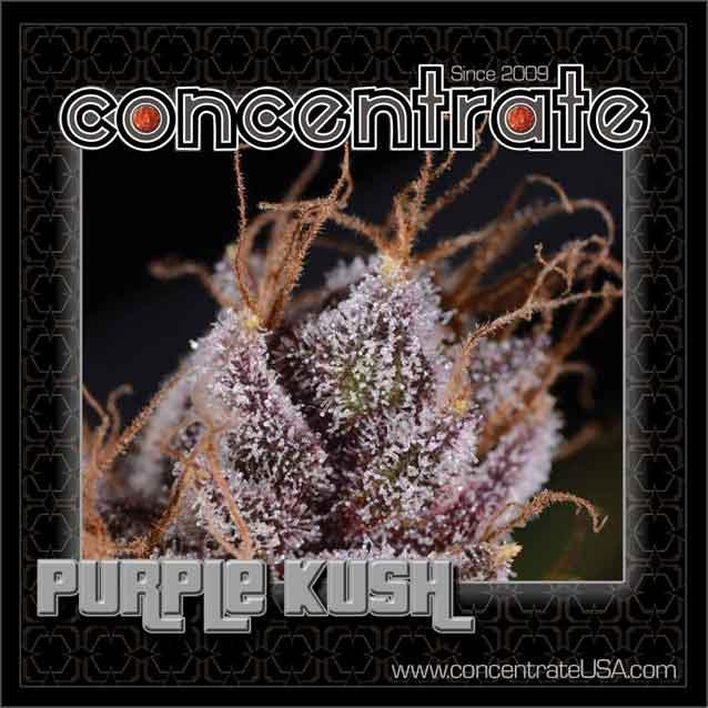 conc-prplksh-live-4-rgb.jpg