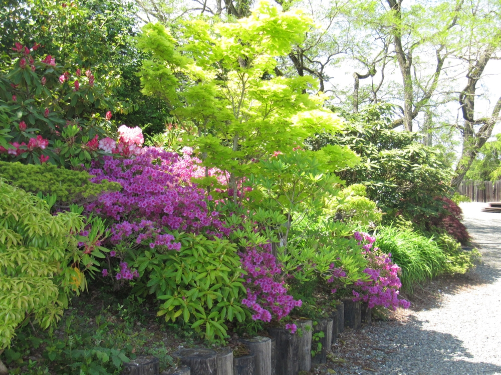 spring_purple_azalea.jpg
