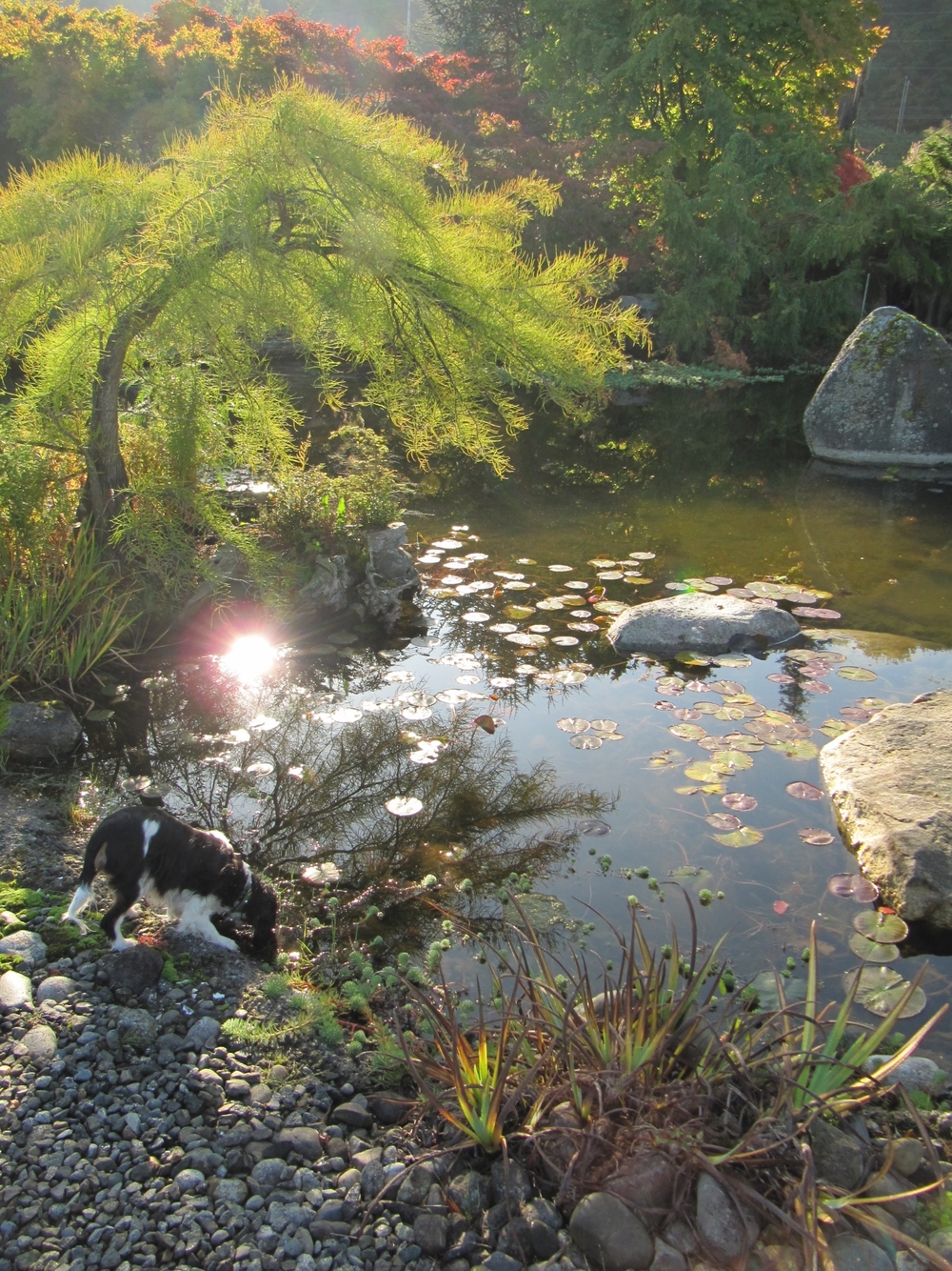 sunlight_on_pond_puppy.jpg