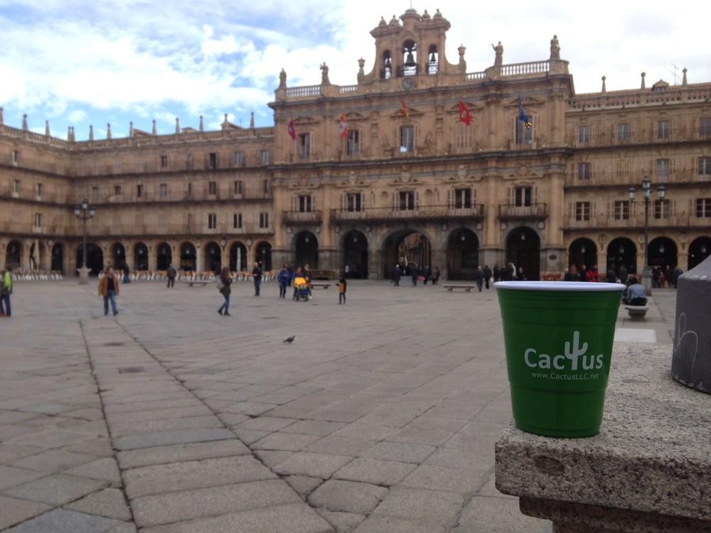 cactus cup Salamanca, Spain.jpg