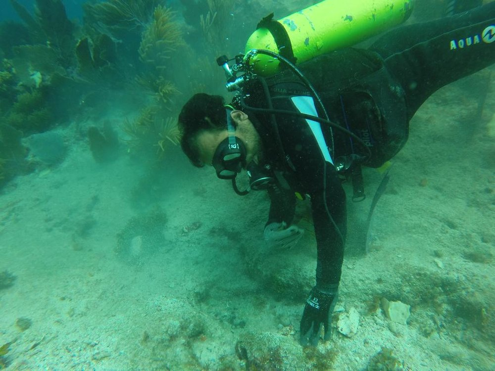 Dr Roberto Junco  Sánchez in action during the survey