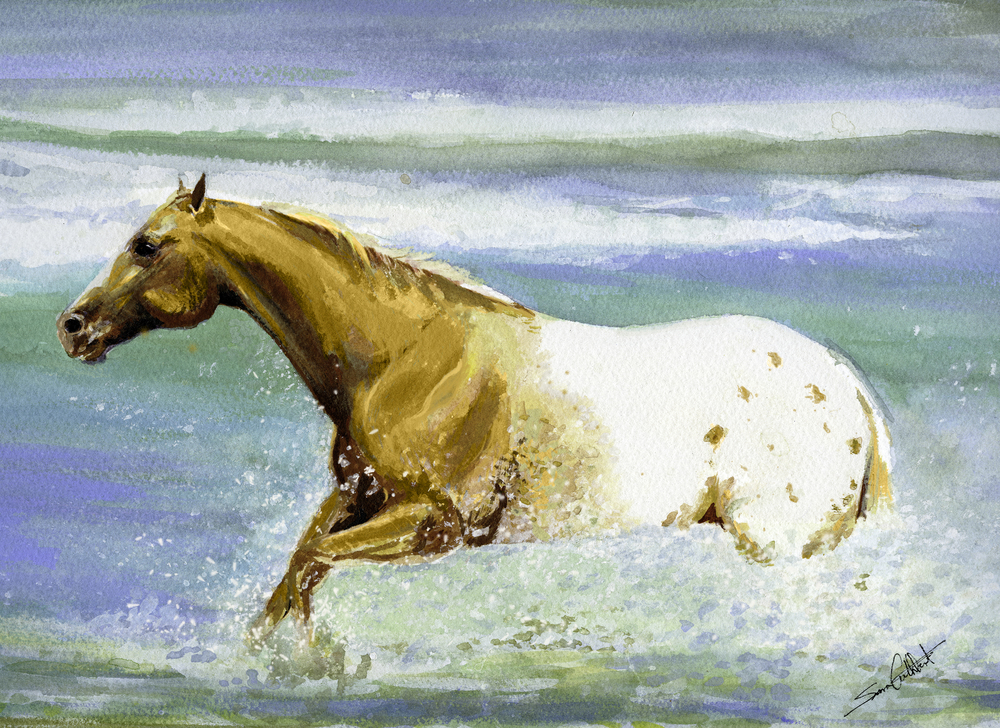 Appaloosa in the Water