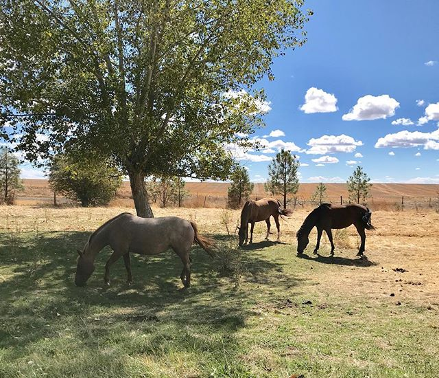 My princess hanging with the girls 🐴🌻💫💕 . #simplejoys #joyissimple #horselife #ranchlife #joy #beauty #nature