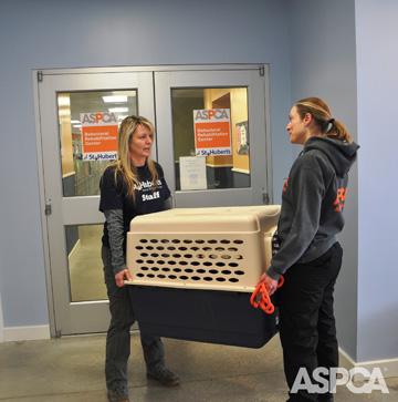 Kaya and Robin were transferred to the ASPCA Behavioral Rehabilitation Center at St. Hubert's on February 23. Photo: ASPCA