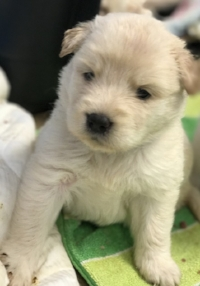 This beautiful puppy from Texas thanks you!