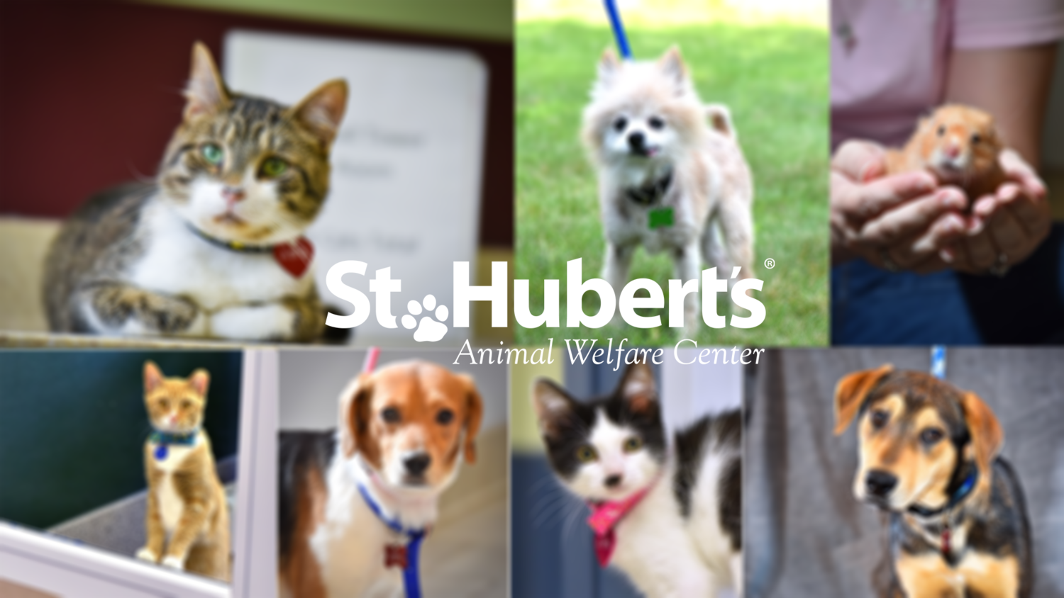 St Huberts Animal Welfare Center
