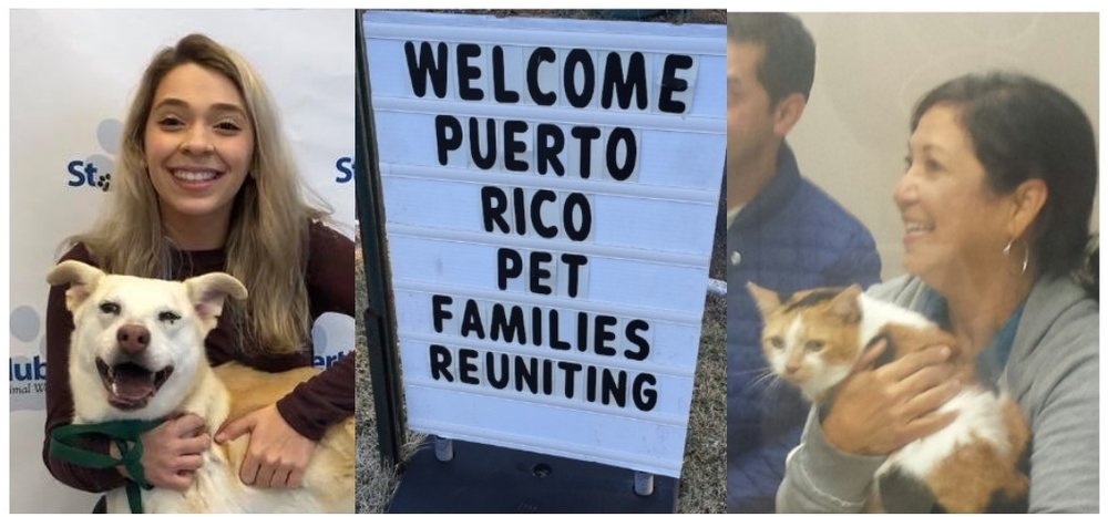 Reuniting Puerto Rico Families & Their Pets    Learn More