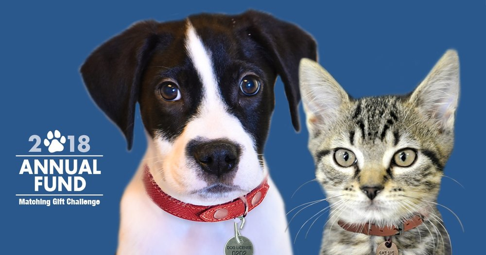 Your Gift Will Be Doubled!    Donate to the Animals