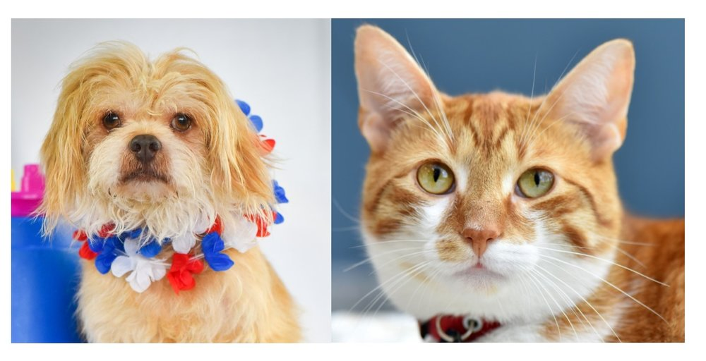 Every Animal Is A Superstar.   Adopt An Animal Today.   Learn About Animal Adoption