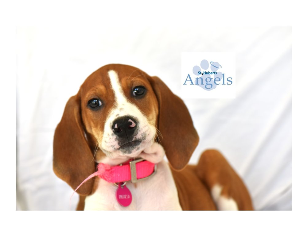 Join Our Angels Monthly Giving Club     Learn More