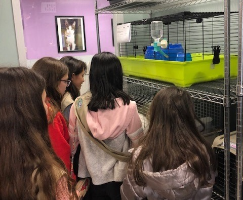 School aged visitors observing small animals available for adoption.