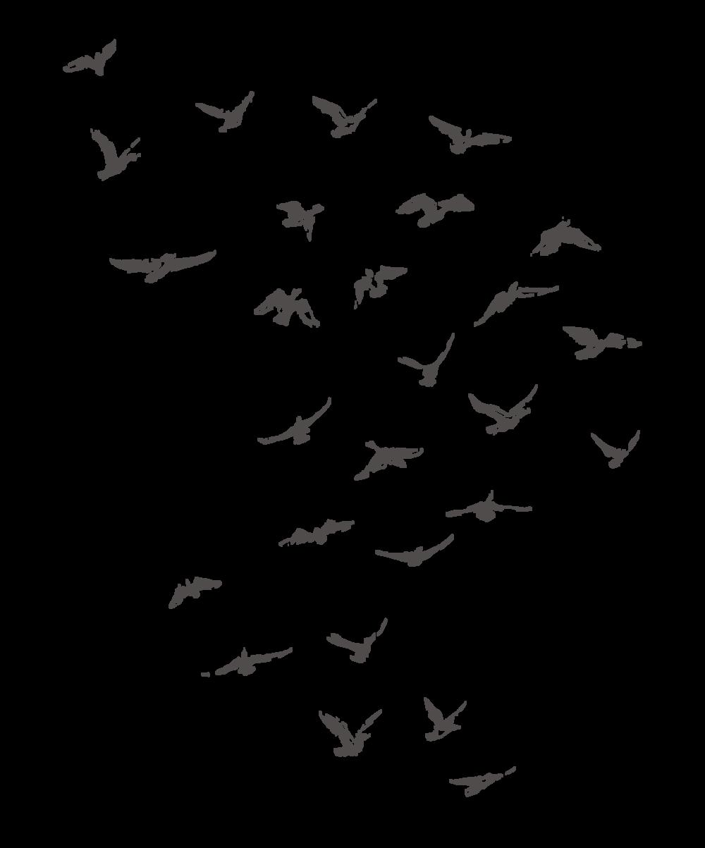 birds_001.png