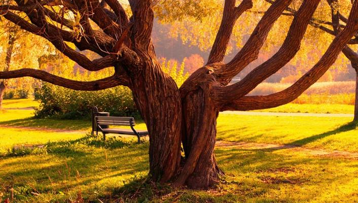 grass-love-nature-trees-706x400-wallpaper.jpg