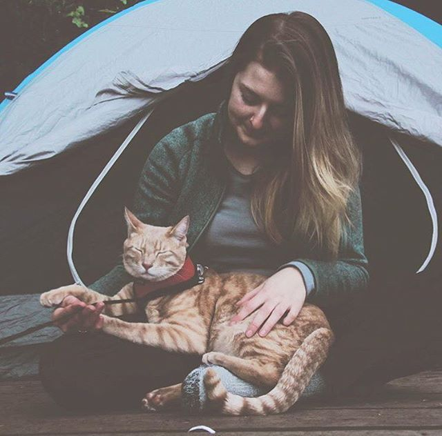 #cathaiku Never ending pets.  Don't hate me cause you ain't me.  I am her owner.  #campingwithcats @adventuresoffishandchips