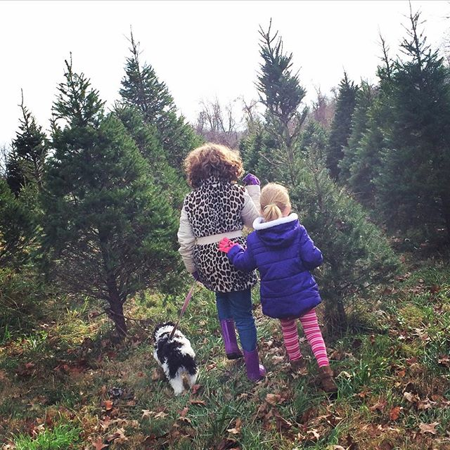 Christmas tree hunting! #thanksgivingtradition #myblessedlife
