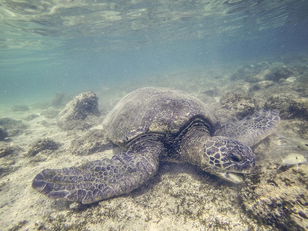 Tanya Turtle