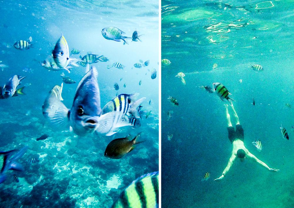 Snorkelling off Koh Phi Phi