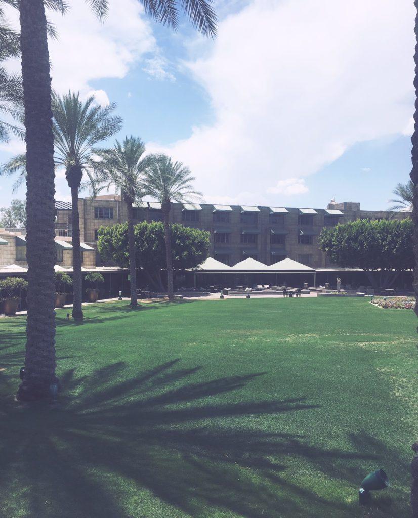 Palm trees and lawn at Arizona Biltmore