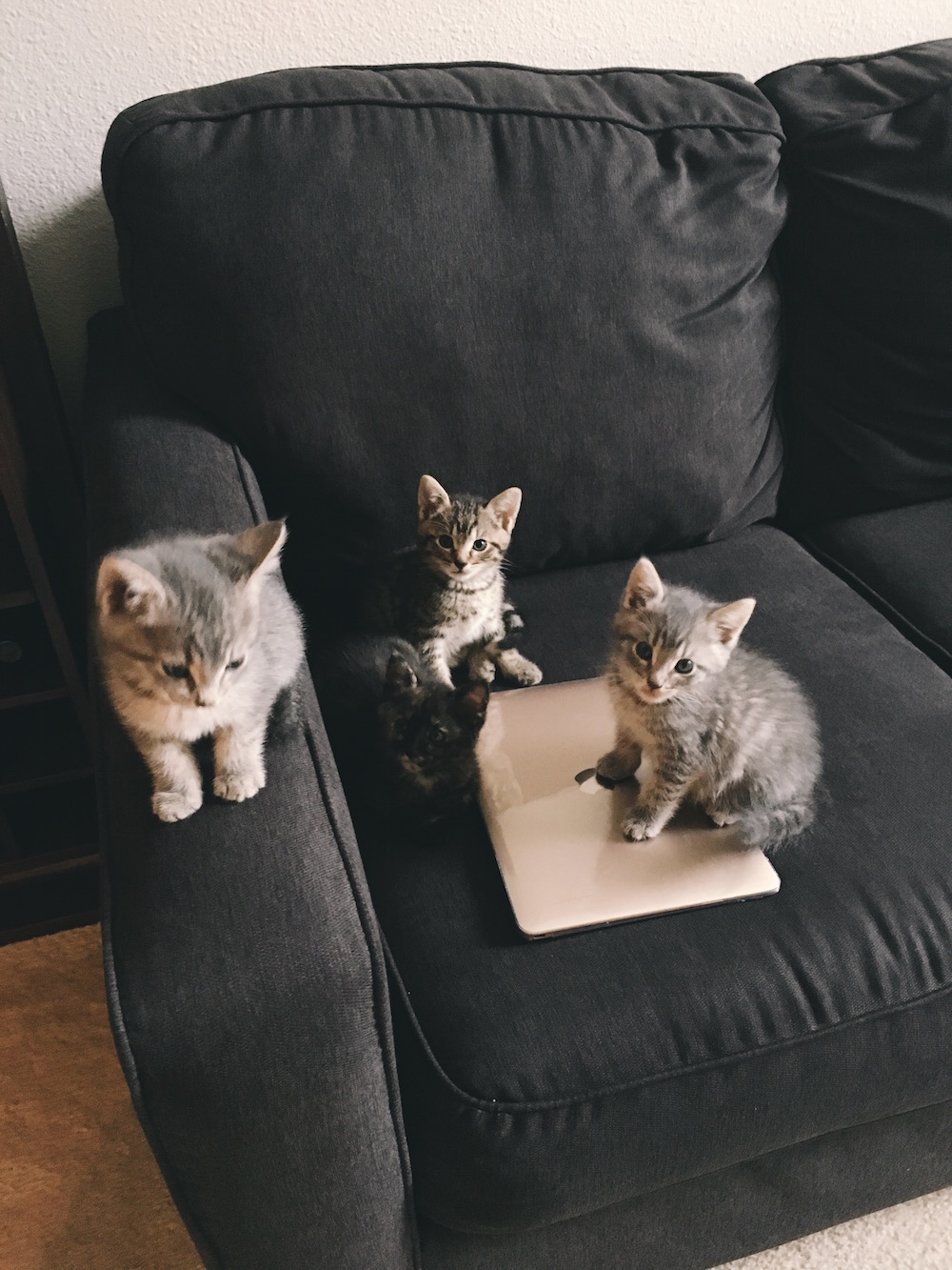 Four kittens on laptop